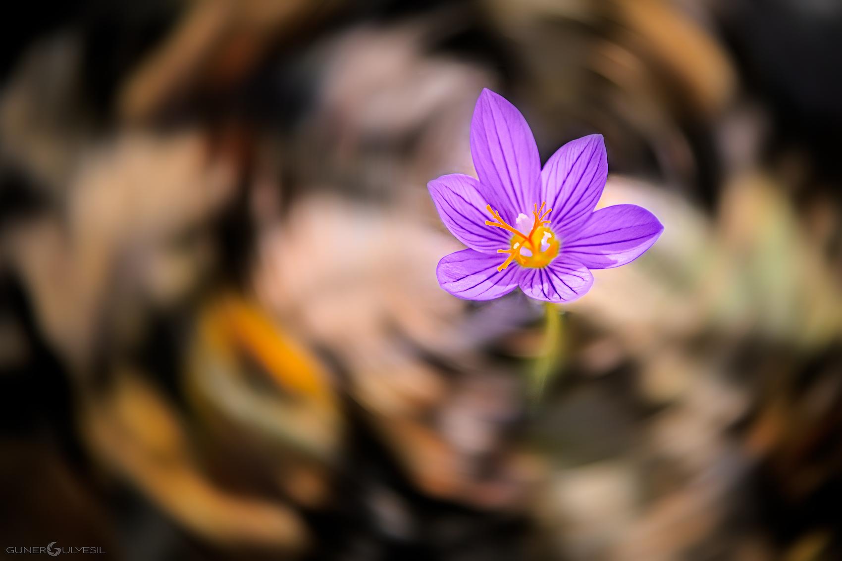 sonbaharda doğa fotoğrafçılığı